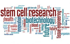 Stem cell research word cloud